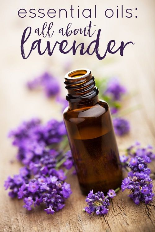 lavender Penis Enlargement Oils