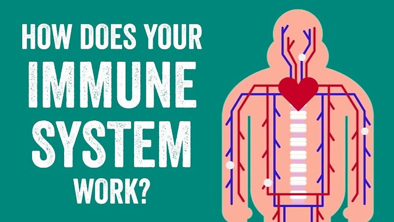 How-Immune-System-Works