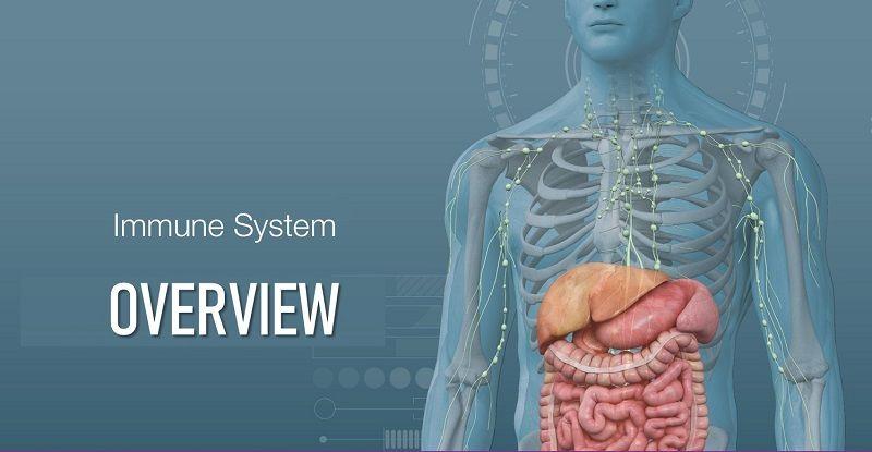 Immune System Image